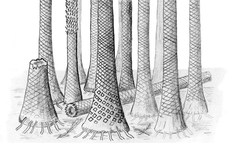 Coolest trees ever: Study: Svalbard forest caused one of Earth's most dramatic climate shifts 400M years ago