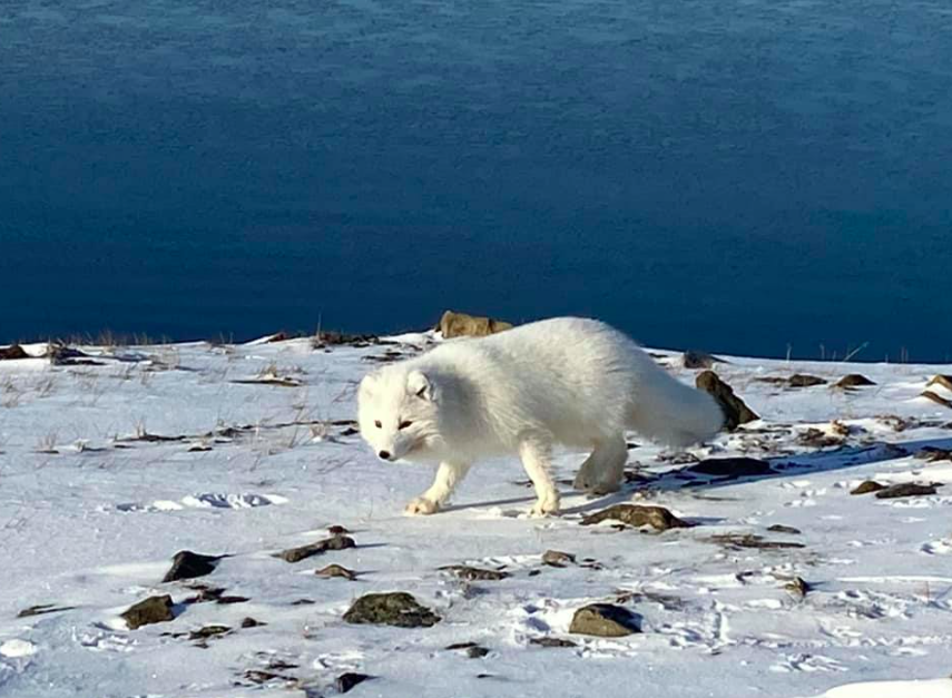 CORONAVIRUS UPDATES FOR SVALBARD FOR WEDNESDAY: 'Digital' community crisis meeting, church hosting online and outdoor holiday services, Isfjord Radio open for Easter