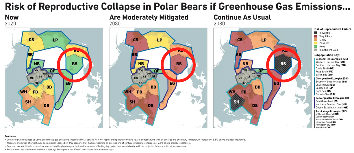 polarbeardecline