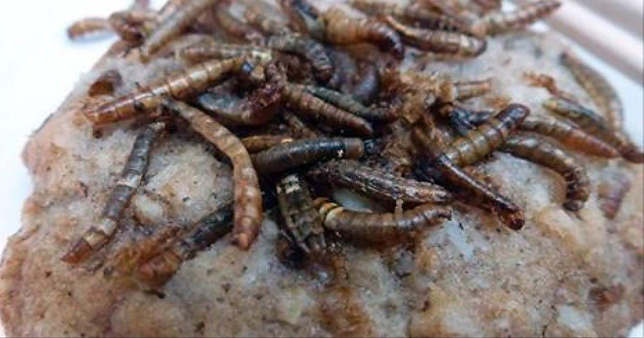 wormcookies