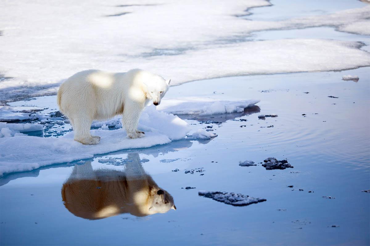 polarbearcensusresults