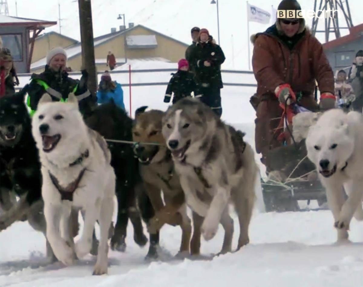 bbcdogs