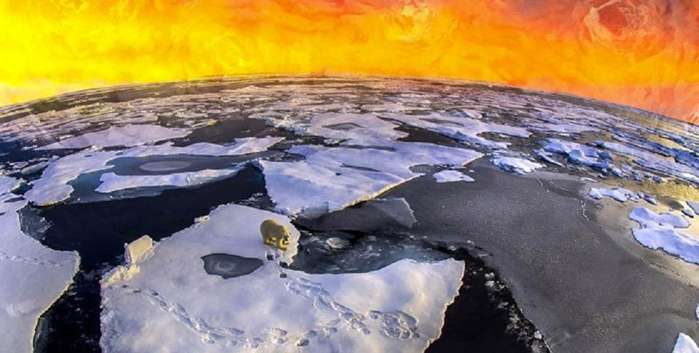 polarbearvg