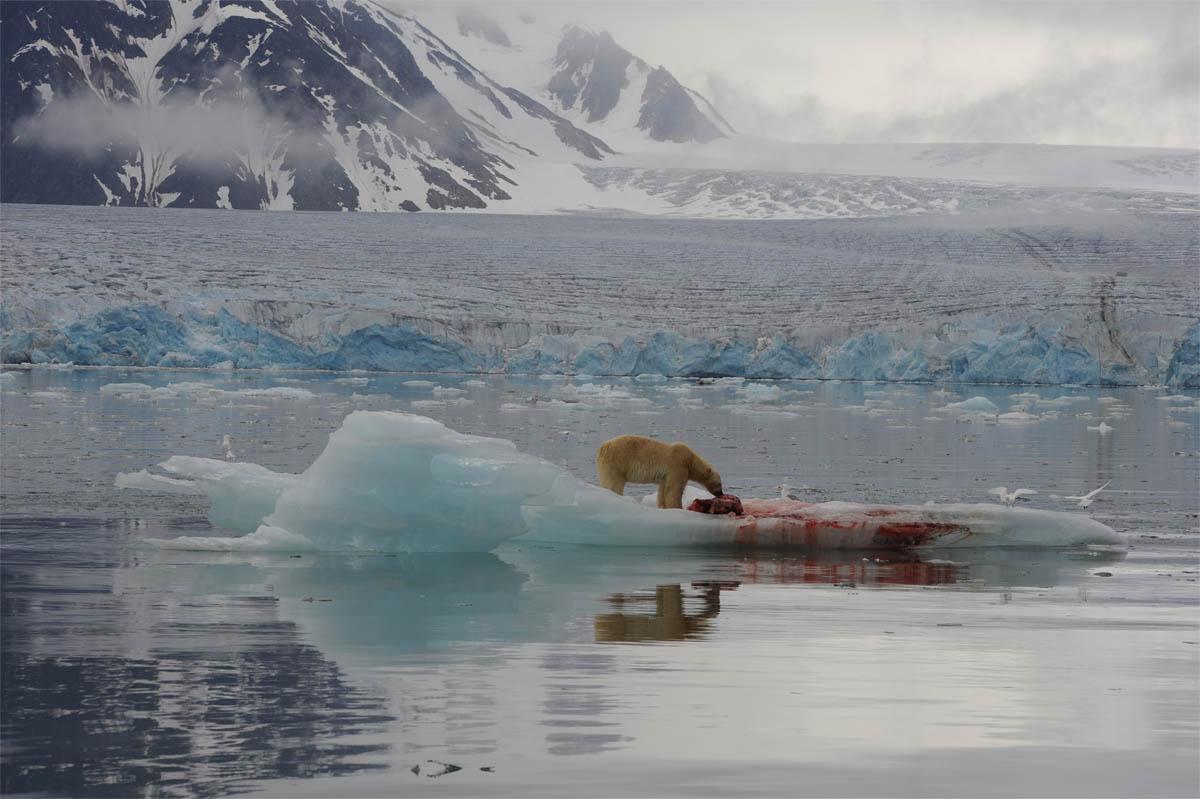 polarbearseal