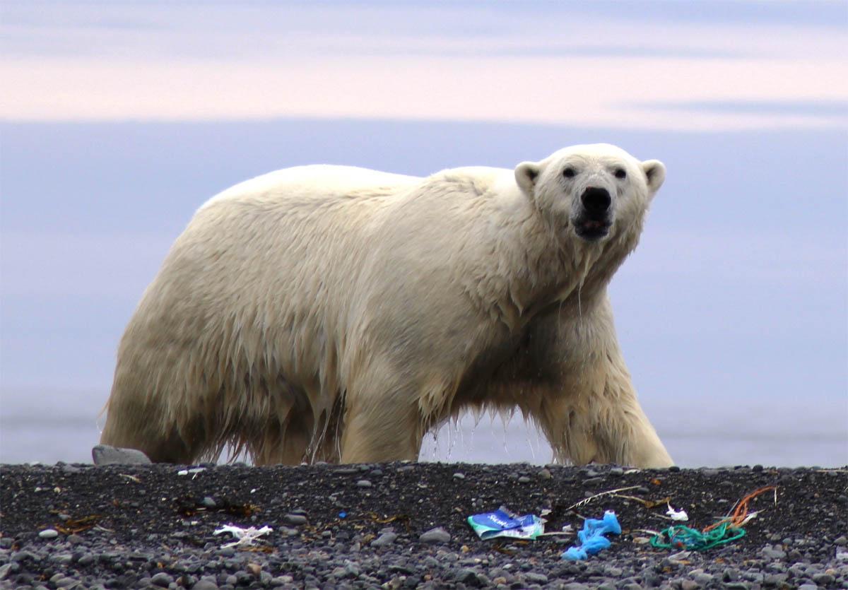 polarbearpickup