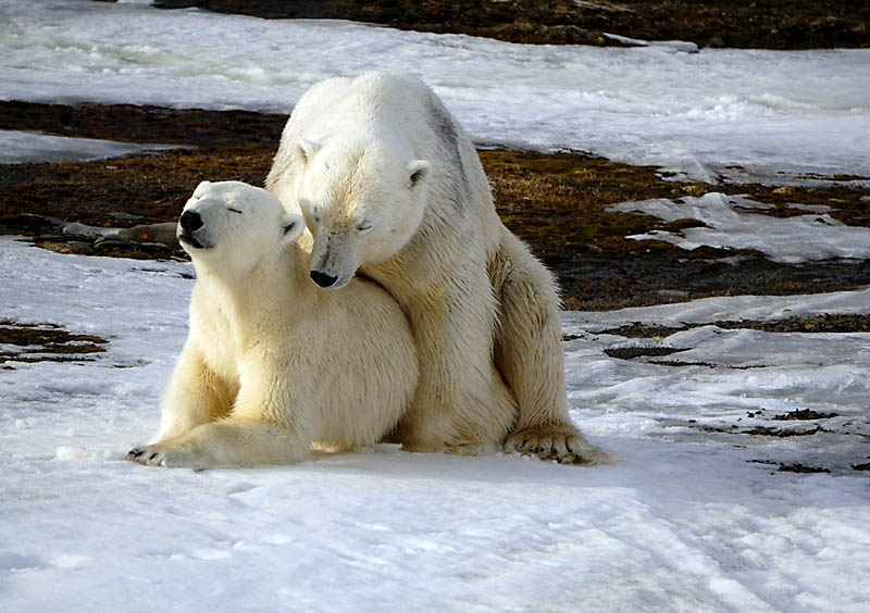 polarbearsexhopen