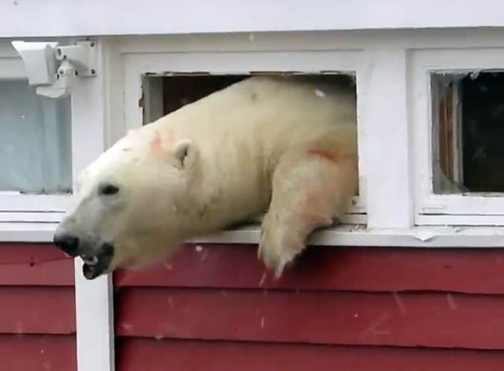 isbjørnifjord