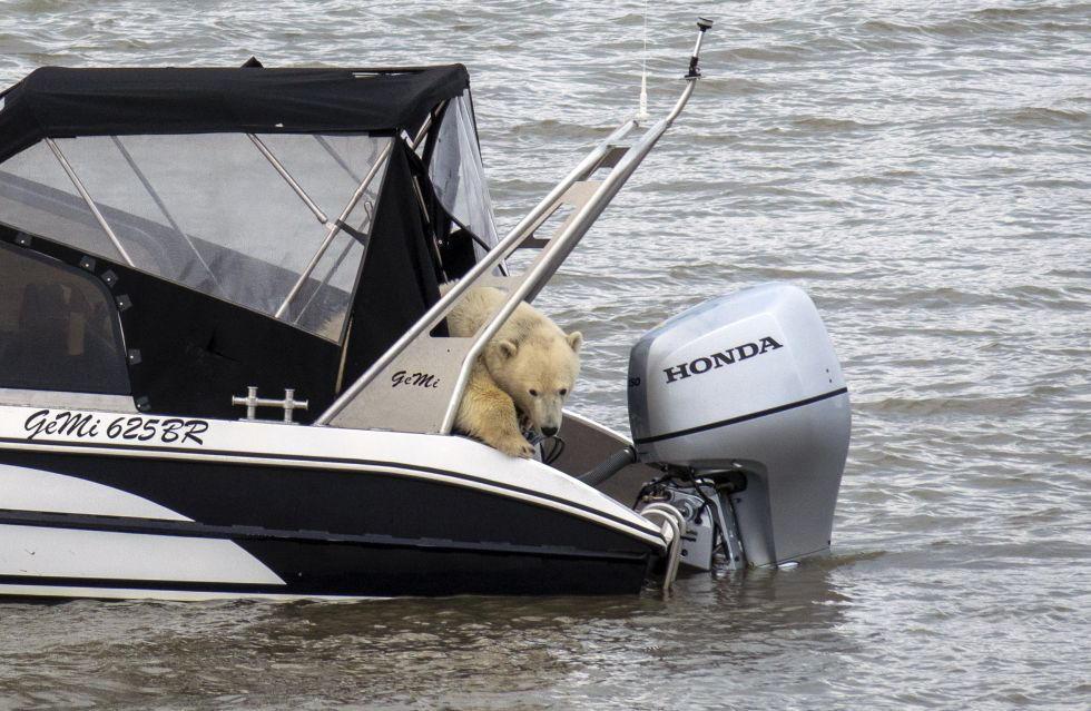 bearsailboat