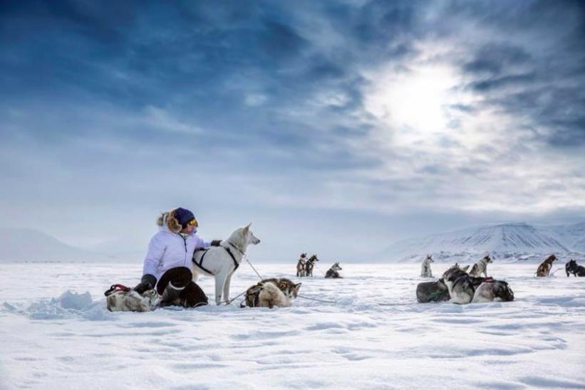 SvalbardVillmarkssenterdogs